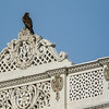 Eagle on the Rooftops, Ahmedabad