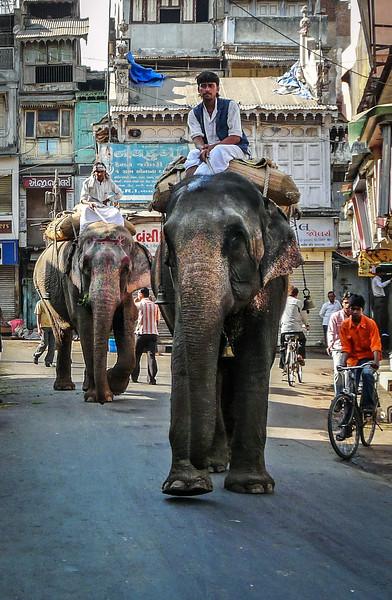 Elephants in Ahmedabad