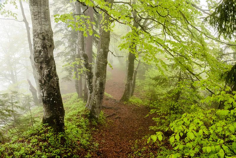Misty Trail, Waidring, Austria
