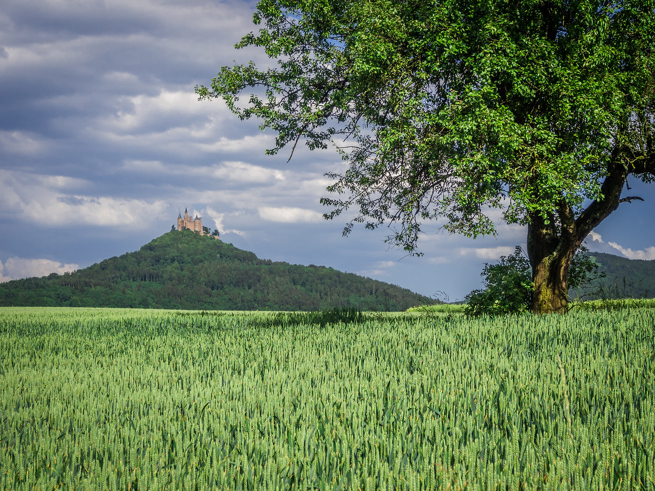 Hohenzollern Castle and Tree, Swabia