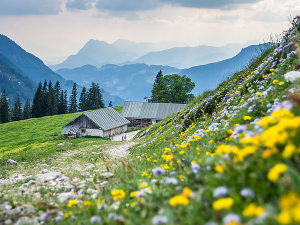 Wildflowers on the Hill, Bavaria, Germany