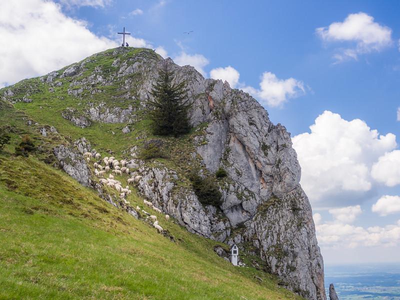 Sheep below the Peak, Tölzer Alps, Bavaria