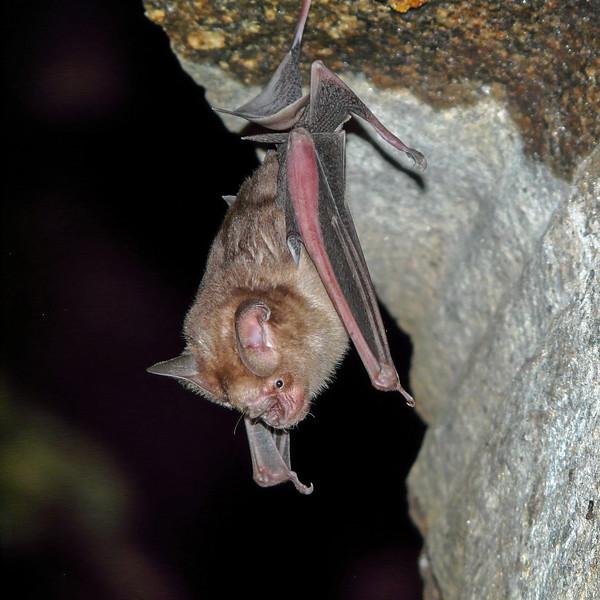 A Bat, Hampi