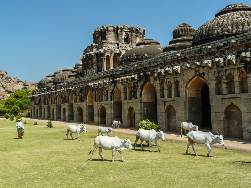 Cows at the Elephant Stables, Hampi, India