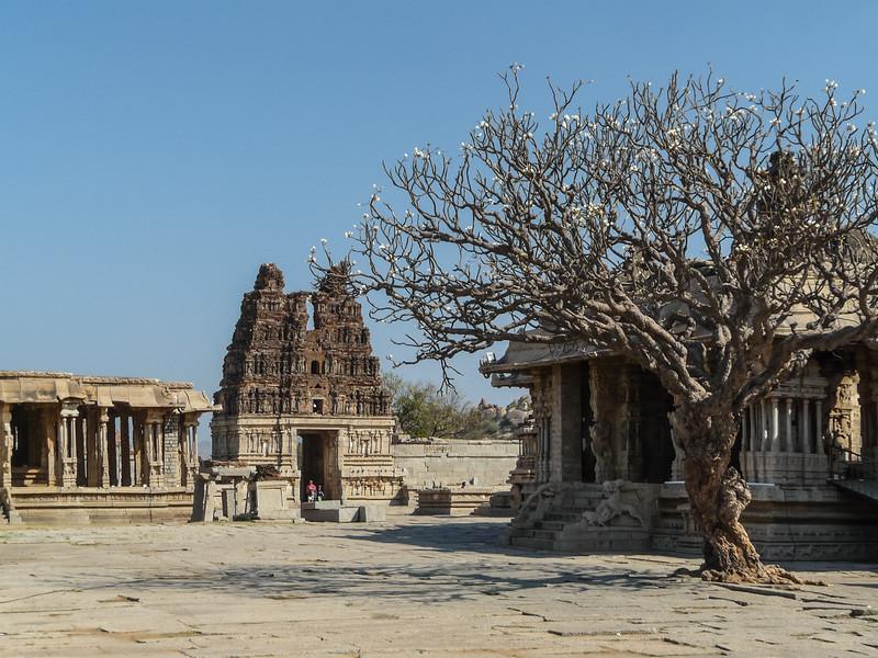 Blossoming Tree at Vittala Temple, Hampi, India