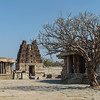 Blossoming Tree at Vittala Temple, Hampi