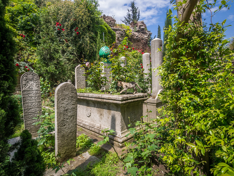 Cemetery Cat, Istanbul