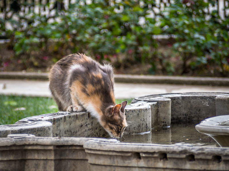 Thirsty Palace Cat, Istanbul