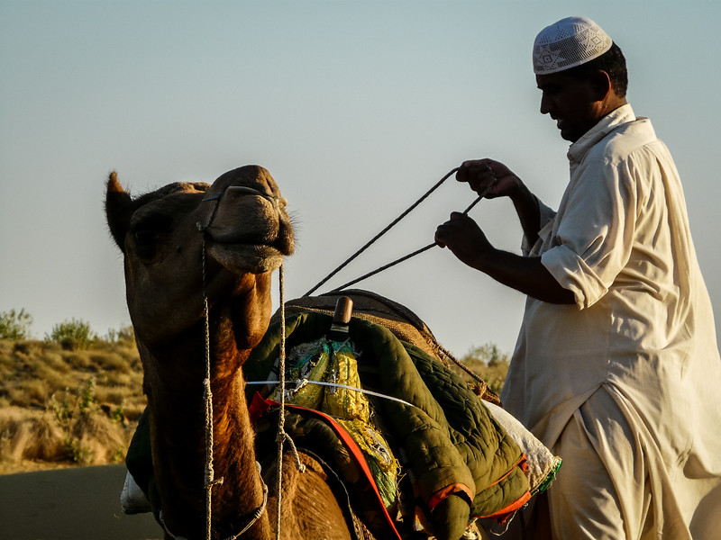 Packing the Camel, Thar Desert, India
