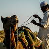Packing the Camel, Thar Desert