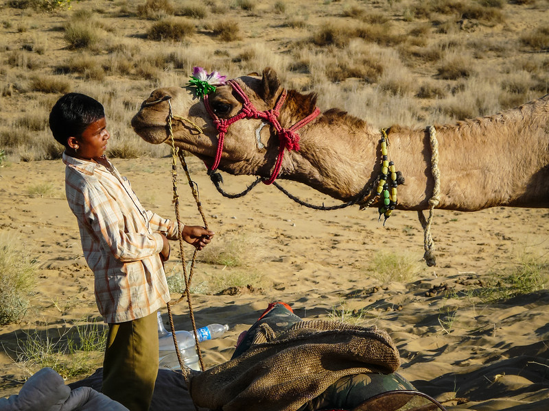 Camel Kiss, Thar Desert, India