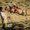 Camel Kiss, Thar Desert, India