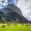 Idyllic Pastures, Lauterbrunnen, Switzerland