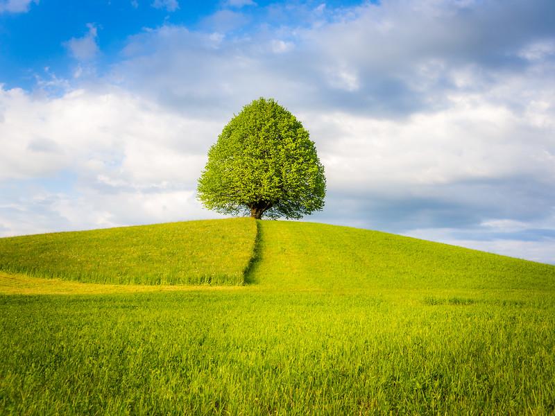 Das Baum des Lebens, Berner Oberland, Switzerland