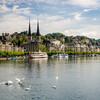 Swans on Lake Lucerne, Switzerland