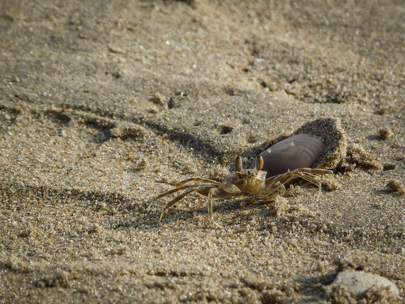 Not Every Crab Knows the Answer, Mamallapuram