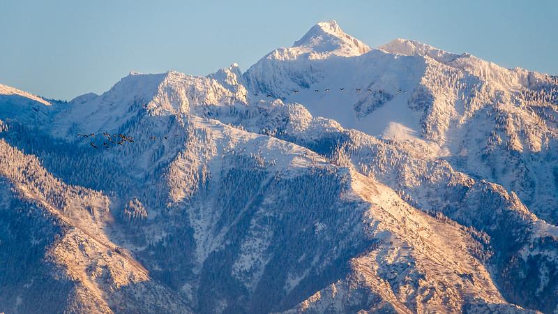 Specks of Geese against Lone Peak, Utah