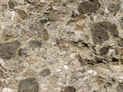 Fossils in conglomerate