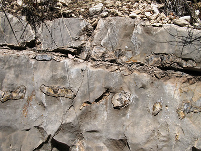 Chert in Limestone
