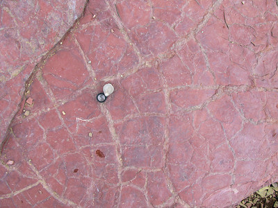Preserved Desiccation Cracks