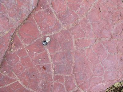Preserved Desiccation Cracks