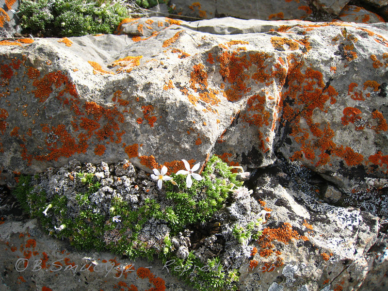 Limestone - a happy home to lichen and moss - some of the rock in this area had shells embedded throughout - so cool to find evidence of ancient aquatic life on now bone-dry land!