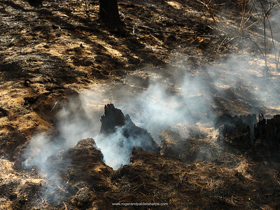 The aftermath of the devastating veld fire on the slopes of the Outeniqua Mountains. George. Garden Route. Western Cape. South Africa