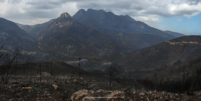 The aftermath of the devestating veld fire on the slopes of the Outeniqua Mountains. George. Garden Route. Western Cape. South Africa