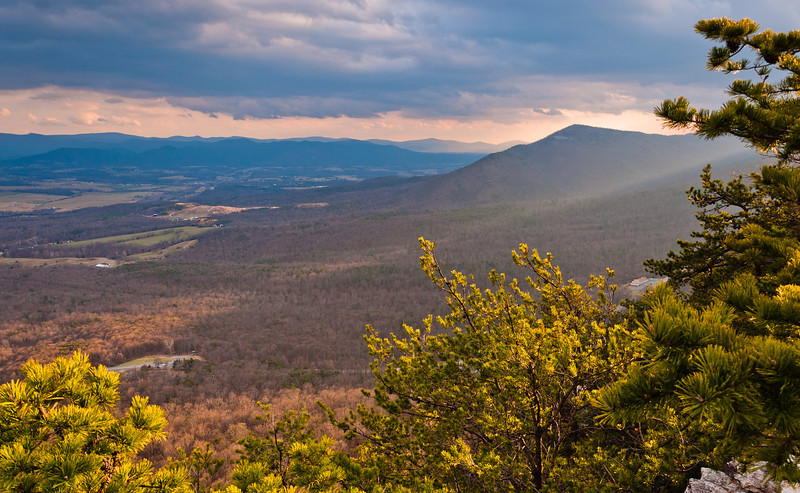 View of the Shenandoah Valley and Appalachian Mountain through pine trees before sunset, from Massanutten Mountain in George Washington National Forest, Virginia