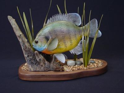 Bluegill 1402