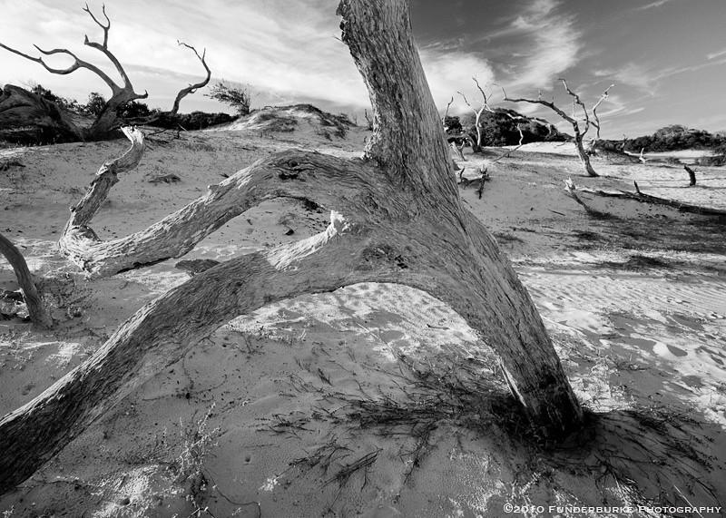 Sand Dunes, Cumberland Island, Georgia