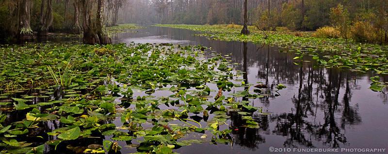Road to Billy's Island, Okefenokee Swamp, Georgia