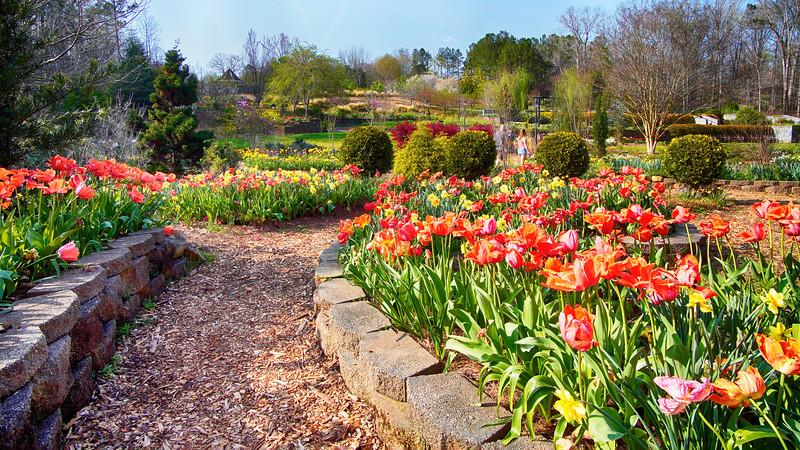 Miles of Tulips