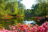 Spring azaleas in bloom in the Azalea Bowl and pond at the Callaway Gardens, Georgia, USA.