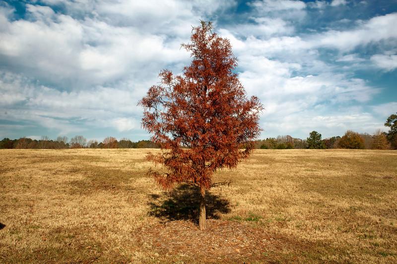 Sandy Creek Park, GA (Clarke County) November 2012