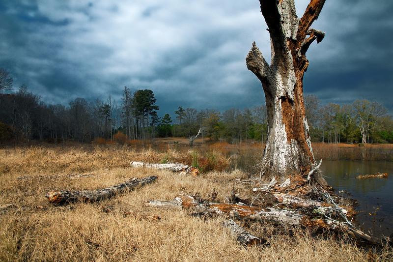 Jersey, GA (Walton County) December 2010