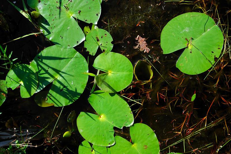 Okefenokee National Wildlife Refuge (Charlton County, GA). 2008
