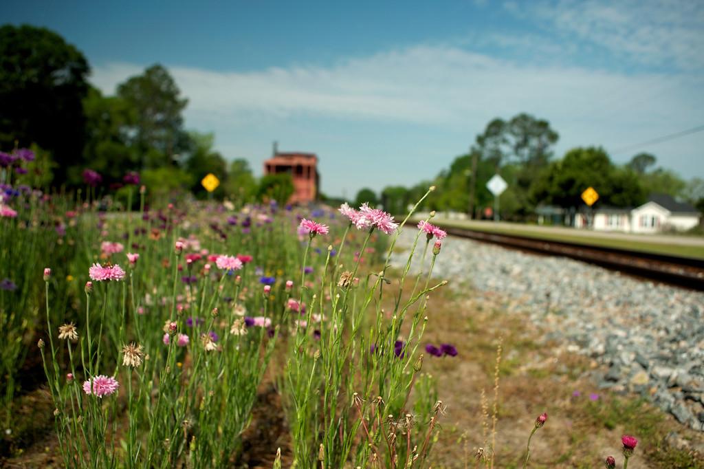 Daisy, GA (Evans County) April 2014