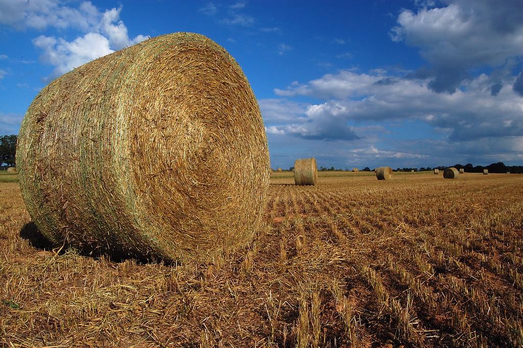 Hay field, Morgan County (GA). 2007