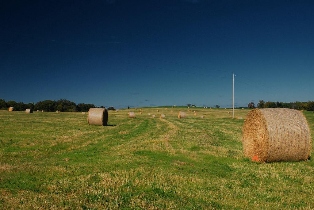 Smithonia, GA (Oglethorpe County) 2008