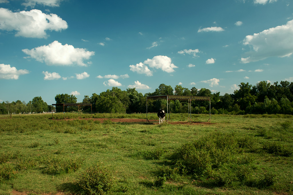 Oglethorpe County (GA) July 2014