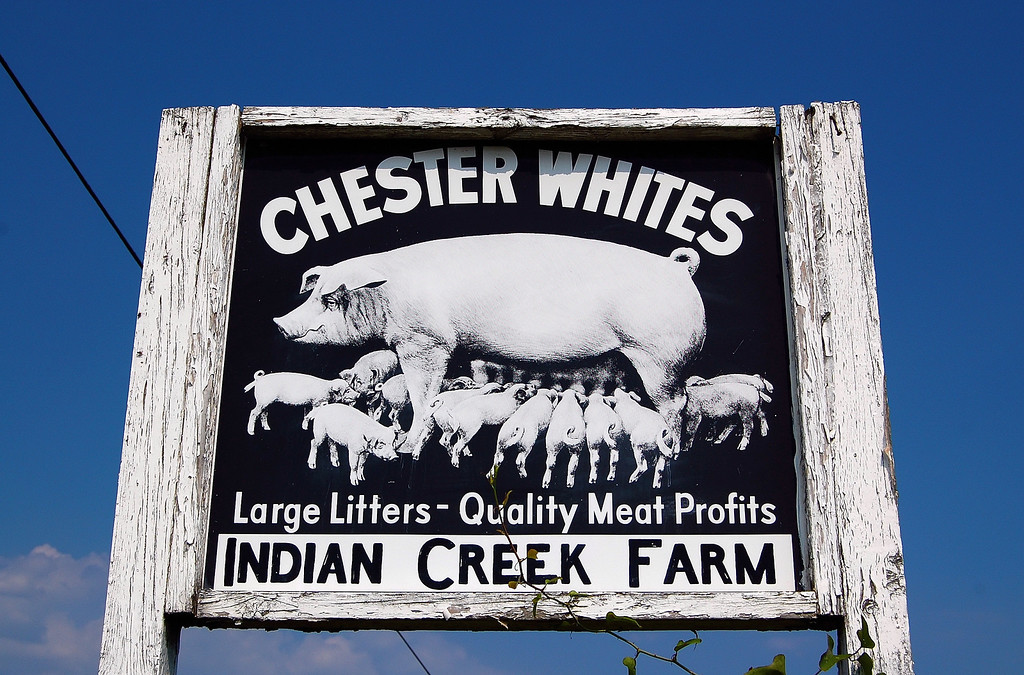 Oglethorpe County (GA) 2007