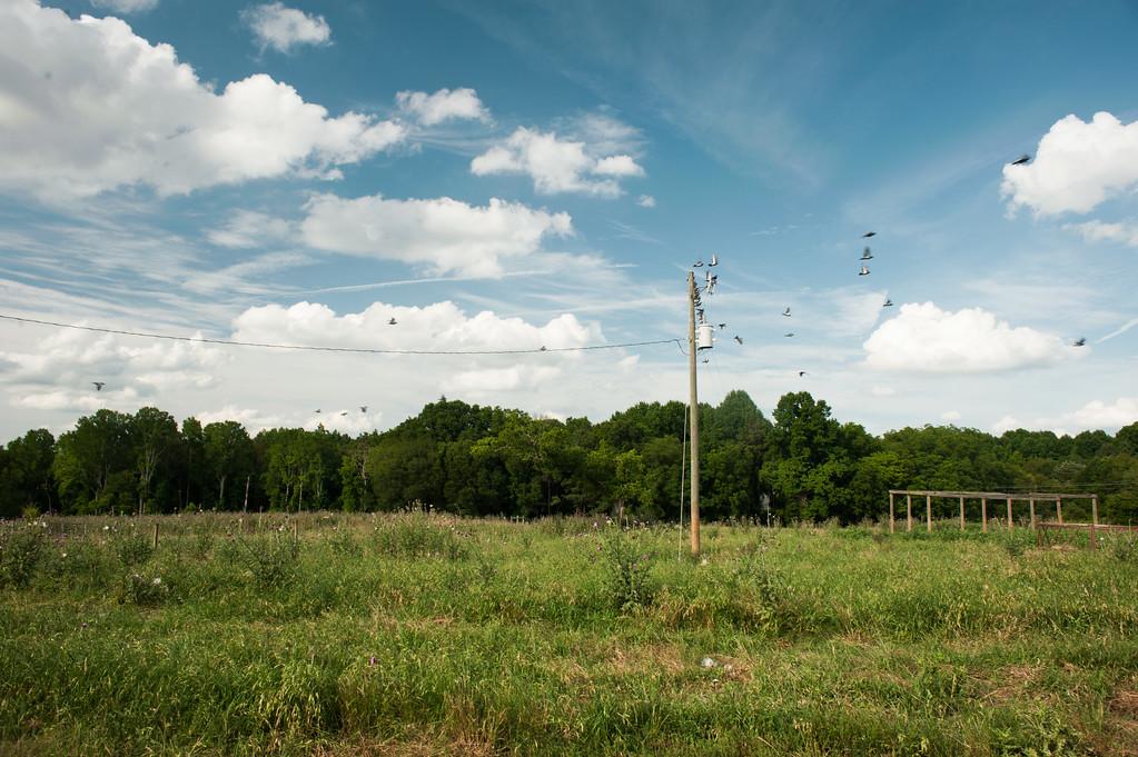 Oglethorpe County (GA) June 2017