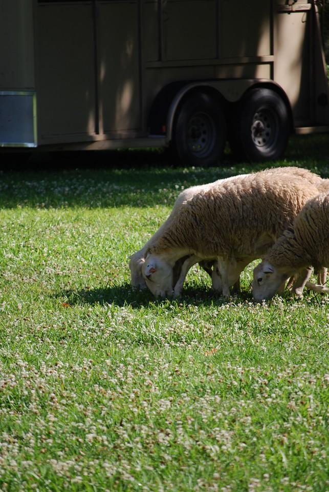 5-9-2009 Highland Games Savannah Georgia 004