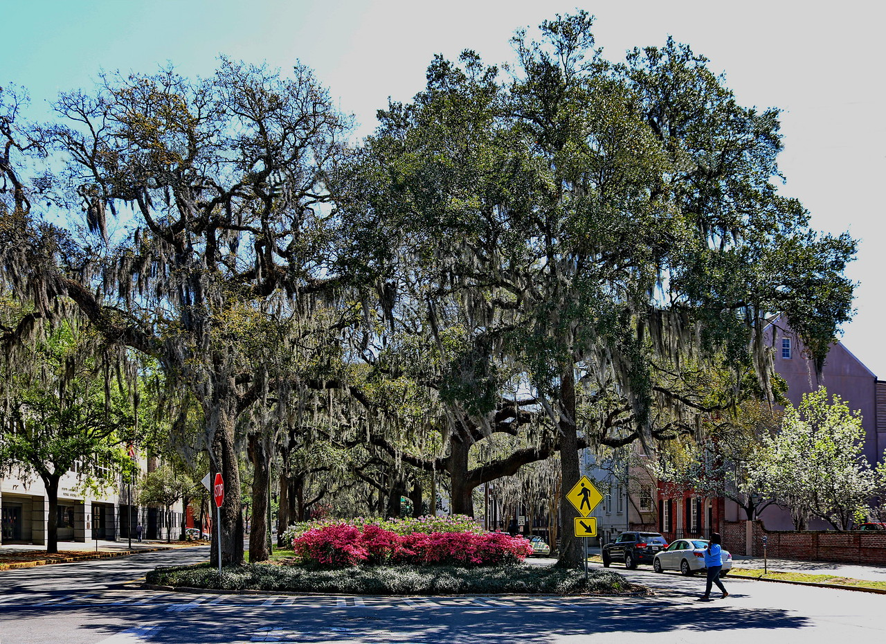 Tree-lined Median