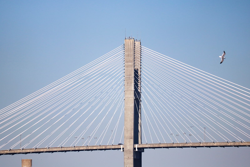 Talmadge Memorial Bridge Cables