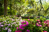 Azalea bushes and spanish moss in a small park in Savannah, Georgia, USA, America.