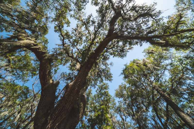 Skidaway Island State Park in Savannah Georgia