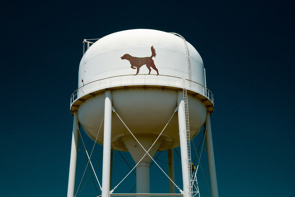Waynesboro, GA (Burke County) April 2011<br /> <br /> Waynesboro takes pride in being the bird dog capital of the world.
