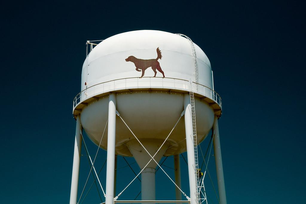 Waynesboro, GA (Burke County) April 2011<br /> <br /> Waynesboro takes pride in being the bird dog capital of the world.